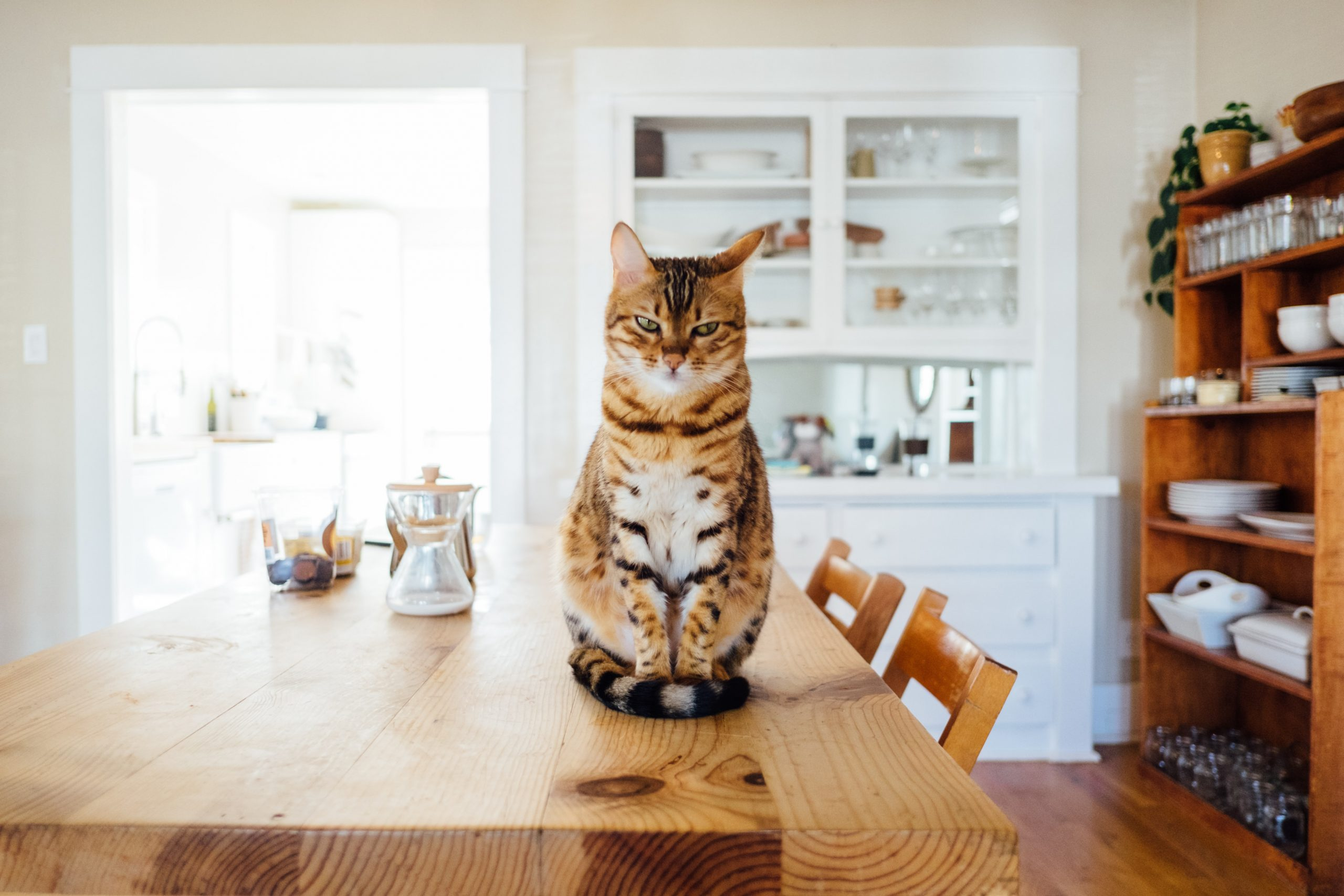 Cat on a table